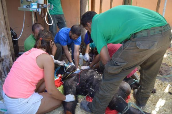 20150626 - Three Injured by Escaped Chimpanzees Cheeta